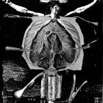 anatomy20, 2002, digital print /canvas, dimensions variable.